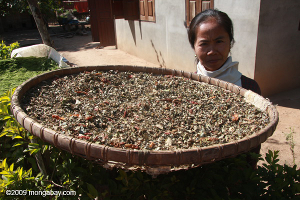 Lao woman showing cher dried chili peppers and other seasonings