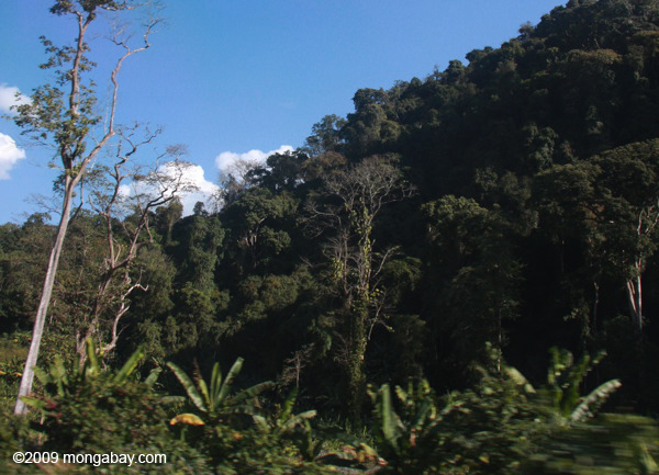 Lao forest