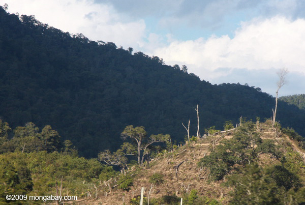 Forest clearing in Laos