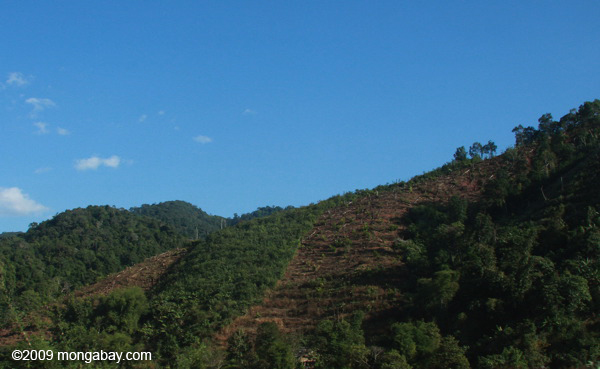 Deforestation for a tree plantation in Laos