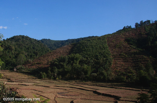 Deforestation and dry rice paddies