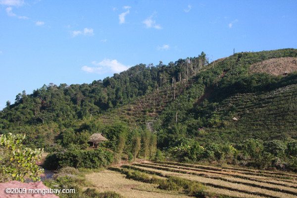 Cleared and degraaded forest in Laos