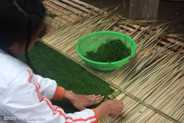 Preparing riverweed for drying
