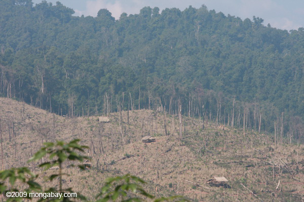 Deforestation for a rubber plantation in Laos