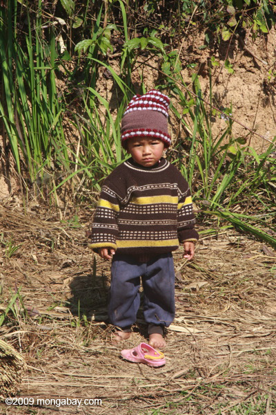 Litle boy near rice field