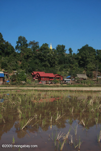 Nam Gneane temple rising rom a forested hill
