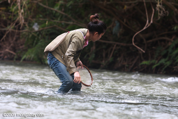 Woman collecting riverweed