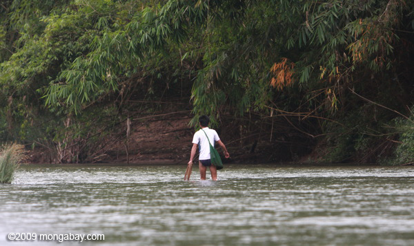Man collecting riverweek in the Nam Tha River