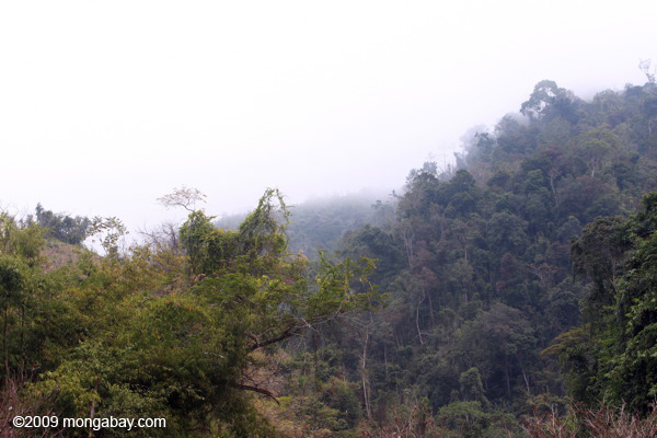 Luang Namtha forest
