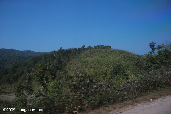 Deforestation for rubber in Laos