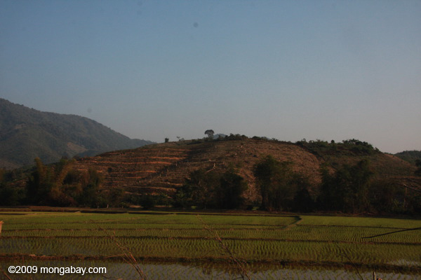 Green rice fields and deforestation for rubber plantations in Udomxai province