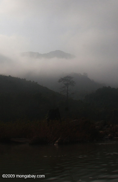 Forest along the Nam Ou river