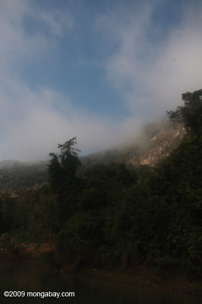 Mist rising over forest along the Nam Ou river