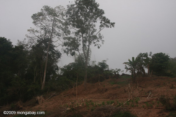 Forest clearing along the Nam Ou river