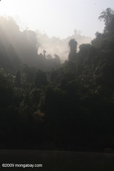 Mist-shrouded Forest along the Nam Ou river
