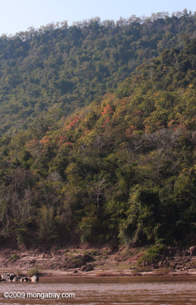 Colorful forest along the Mekong