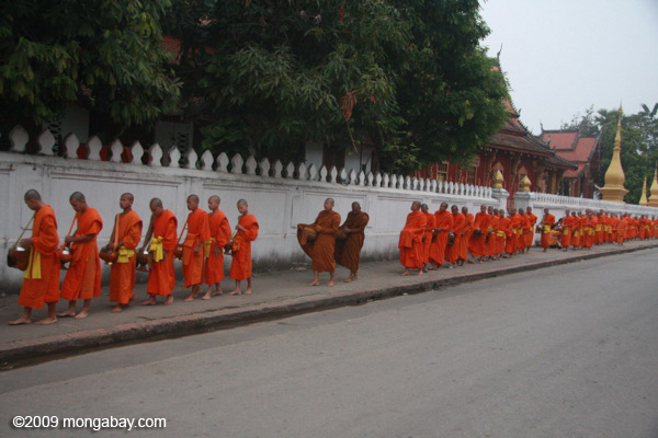 Morning alms during the procession of monks