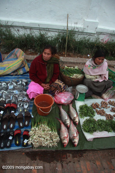 Fish and sandals for sale in the Luang Prabang morning market