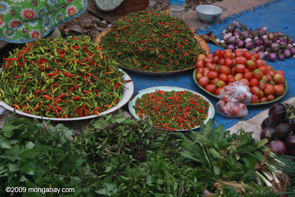 Chilis, tomatoes, and other vegetables and species in the Luang Prabang morning market