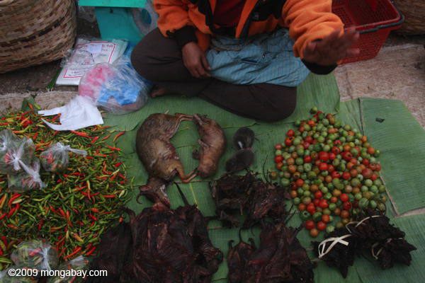 Mouse deer and bamboo rats in the Luang Prabang morning market