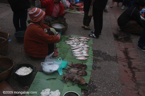 Bushmeat for sale in the Luang Prabang morning market