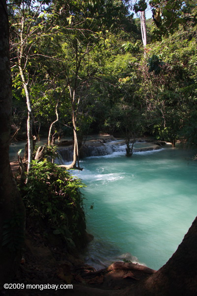 Milky turquoise waters of Tad Kwang Si