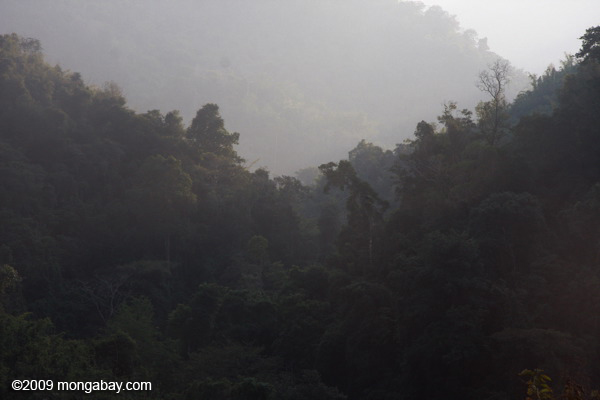 Tropical forest in  Nam Et-Phou Louey