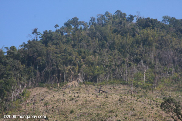 Deforestation on the border of  Nam Et-Phou Louey National Protected Area