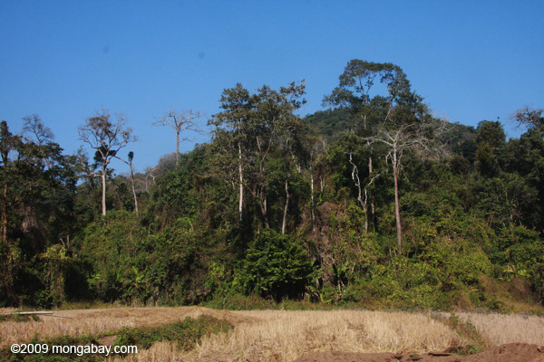 Dry rice fields and rainforest