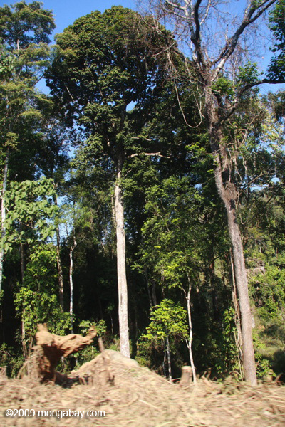 Deforestation near Nam Et-Phou Louey National Protected Area