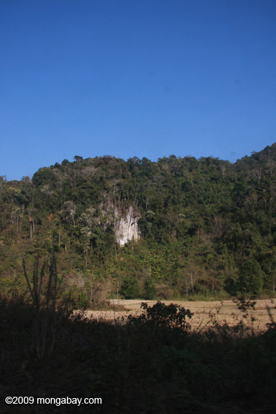 Karst formation, forest, and dry rice paddies in Laos
