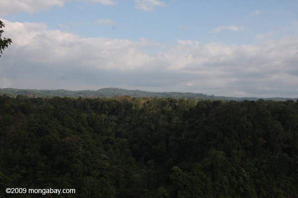 Rainforest of Dong Hua Nao National Protected Area