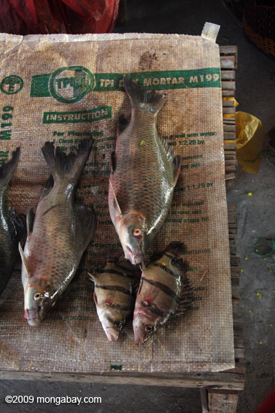Fish sold in a morning market in Muang Khong