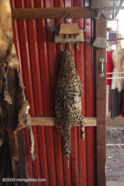 Marbled cat pelt in a market stall