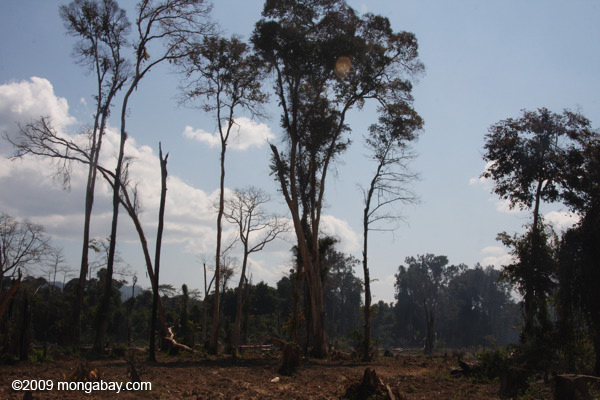 Smoking rainforest in Southern Laos