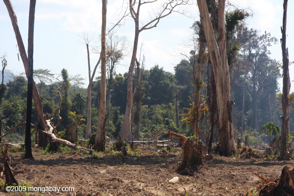Charred and still smoking forest in Laos
