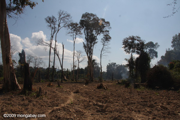 Deforestation in southern Laos