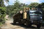 Logging truck carrying timber out of the Malaysian rainforest -- borneo_2964