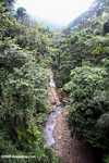Rainforest creek -- borneo_4024