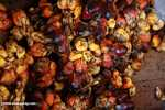 Oil palm fruit -- borneo_4527