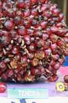 Tenera oil palm -- borneo_4574