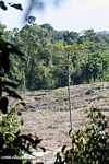 Deforestation in Sabang -- borneo_4781