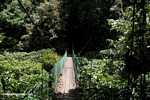 Bridge over the Danum river -- borneo_6292