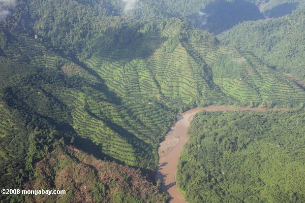 Oil palm plantations in Sabah, Malaysia. The palm oil industry maintains its product is 'greening the planet' but the reality is more complex