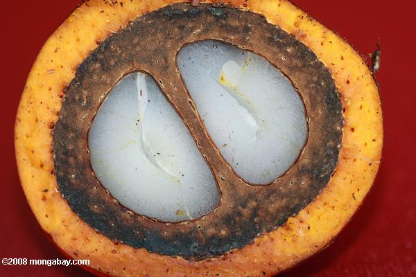 Oil palm fruit cut in half.