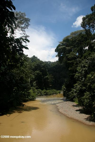 Borneo rainforest -- borneo_6294