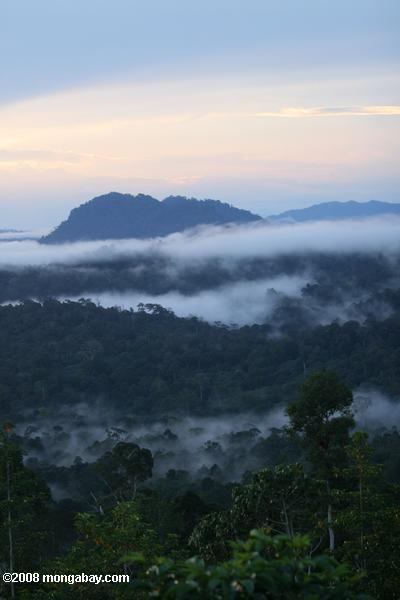 Mist rising from the Borneo rainforest