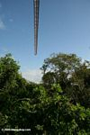 Rain forest canopy crane in Panama City's urban park