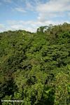 The rainforest canopy as seen from a construction crane in Panama