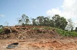 Tropical forest destruction in Panama
